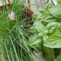 Gruppenlogo von Arbeitsgruppe Aussenräume – Urban Gardening